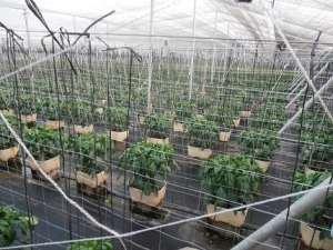 Plantación eco-min